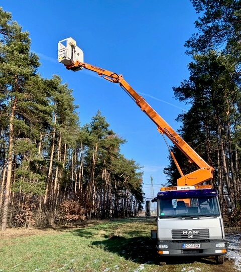 Wycinka drzew w Poznaniu - przy użyciu podnośnika koszowego